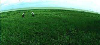nuocgrass