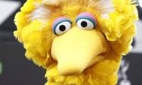 I Am Big Bird The Bird